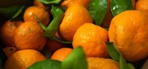 best produce denver